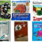 Produtos químicos para combater pulgões