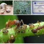 Plantas na luta contra insetos
