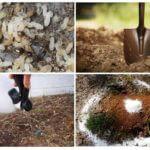 Métodos de controle de formigas