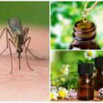 Óleos essenciais de mosquitos