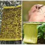 Armadilhas para insetos pegajosos