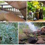 Óleos essenciais, absinto e abeto brilhante são capazes de se livrar dos mosquitos