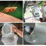 Armadilhas para mosquitos caseiras