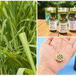 Óleo essencial de citronela contra mosquitos