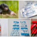Receitas populares para combater a toupeira