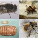 Visão de cavidade de moscas