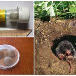 Comprimidos Alphos Mole + from moles