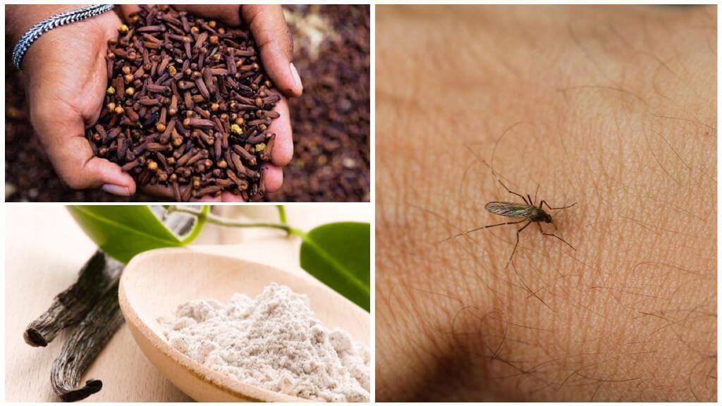 Odor de mosquito