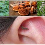 Aromas para combater mosquitos