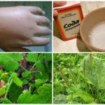 Receitas populares de picadas de mosquito