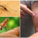 Picada de mosquito mosquito