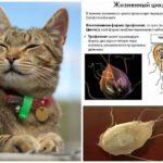 Giardia em gatos